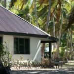 coconut beach fiji bures