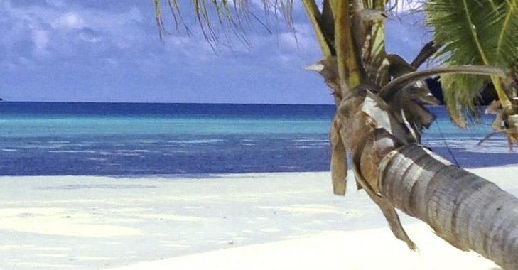 coconut beach fiji
