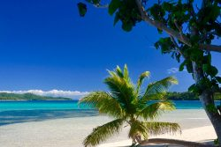 coconut-beach-resort-beach-daylight-palms