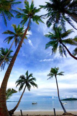 coconut-beach-resort-beach-framed-by-palm-trees