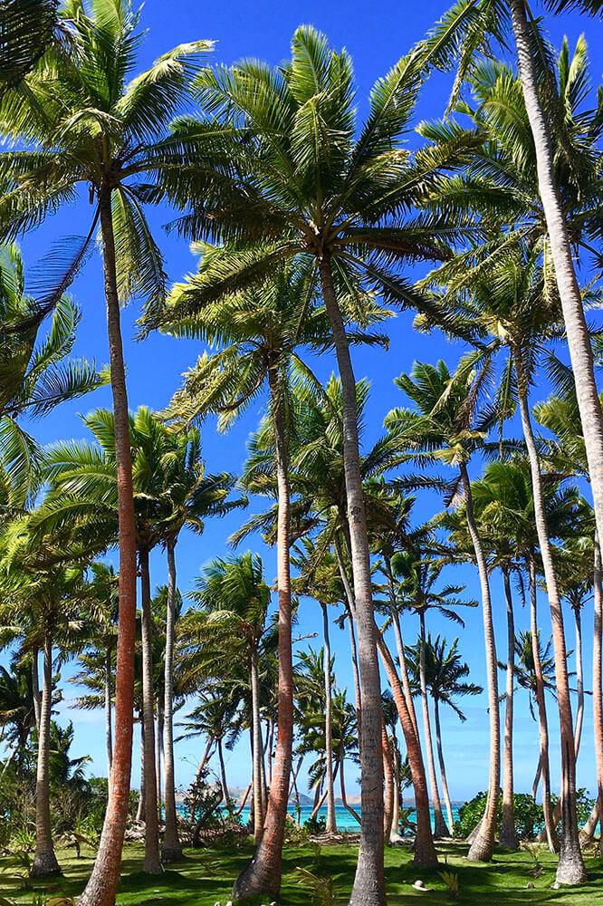 coconut-beach-resort-grounds--to-beach-03