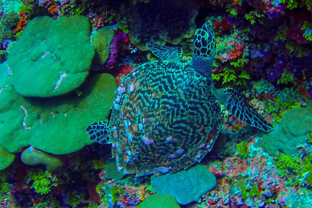 scuba-diving-coconut-beach-resorts