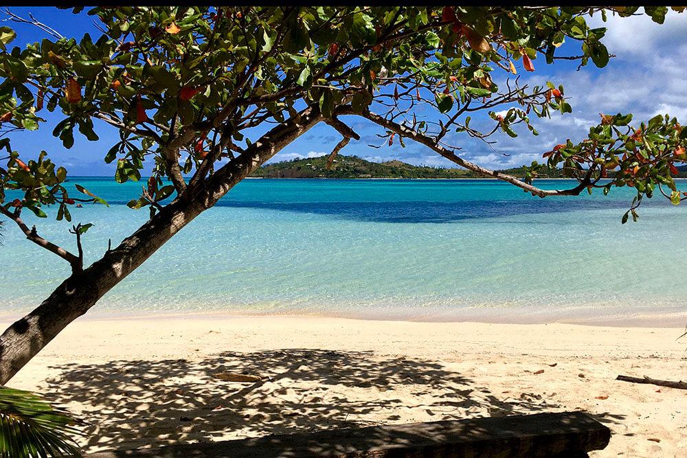 coconut-beach-resort-beach-trees-on-beach