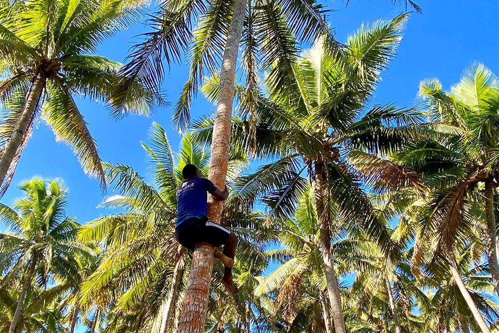 coconut-demo-coconut-beach-resorts
